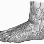 lymph foot
